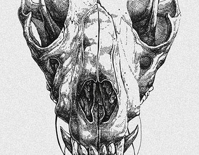 Skulls #2