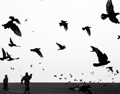 Pigeons - Marina Beach, Chennai