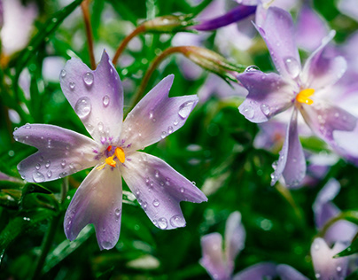 Flowers and drops