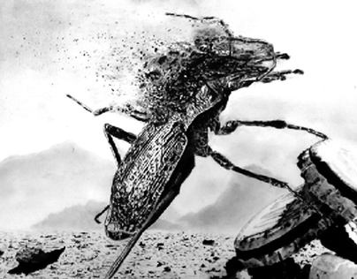 Insects extinction