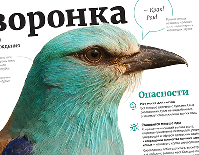 European Roller in Belarus — information poster