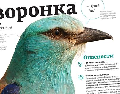 European Roller in Belarus —information poster