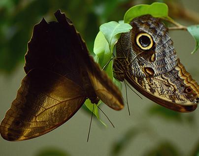 Meeting the Butterflies