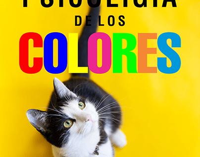 CAT STUDIO - Psicología del Color