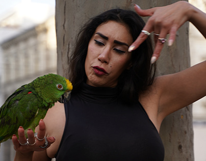 Promi Zimmer - Alina Latina feat. David Solomon