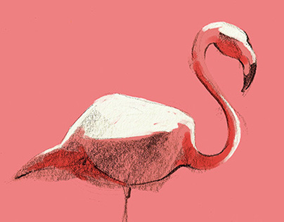 Color Nature // Illustration