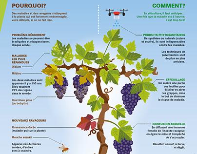 Infographie: Protection de la vigne (Prométerre)
