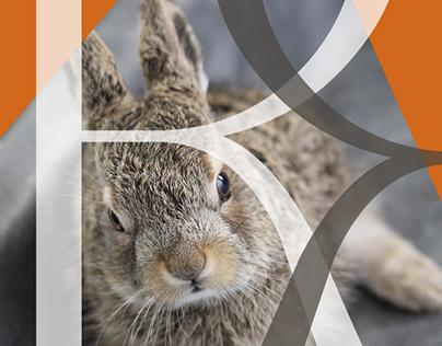 Riesling Rabbit