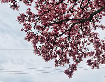 Spring Superbloom