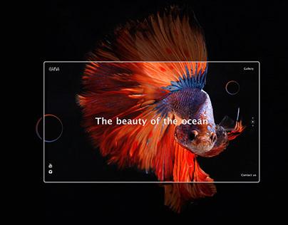 Fish Gallery Web App UI Design