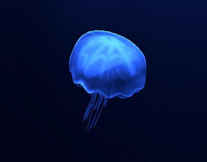 Jellyfish #Animay