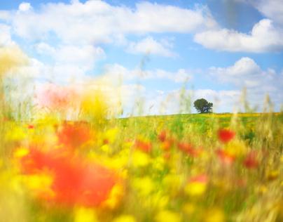 Kingdom of Flowers