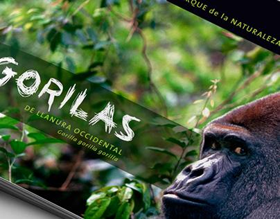 Gorilas. Cabárceno