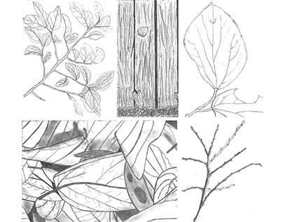 Image as Documentation – Leaves