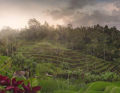 Bali (11/2016)