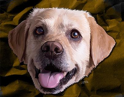 Illustration for Labrador retriever