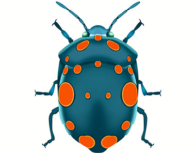 Physic Nut Stink Bug