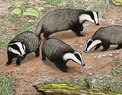 natural history illustration 2