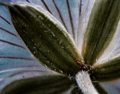Underneath a Flower