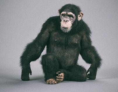 Chimp_3d
