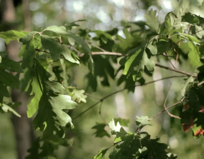 Nature Project - Canon T4i Footage