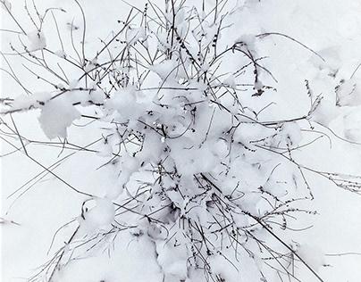 winterlude...