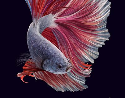 Beta Fish Digital Painting