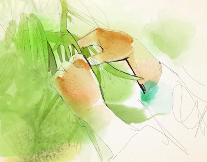 Watercolor and ink animation, organic food and nature