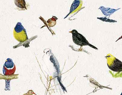Aves de Bogotá / periódico El Espectador