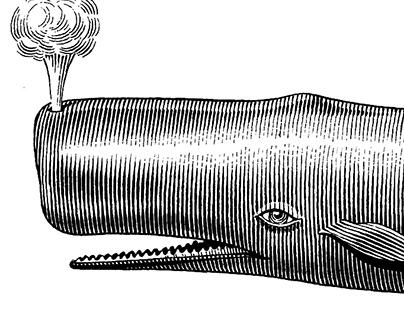 Sea life Illustrations for Leslie Evans Designs