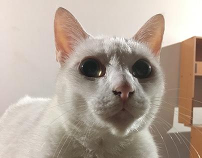 Into the Feline Eyes