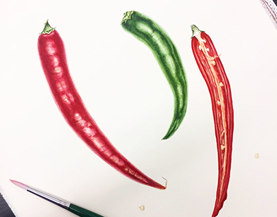 """Botanical watercolor """"Red and green hot chile peppers."""""""