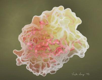 Protein visualization