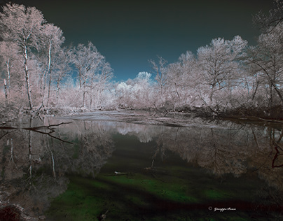 In the Ticino park, infrared.