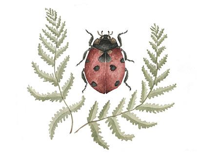 Ladybug Fern Wreath