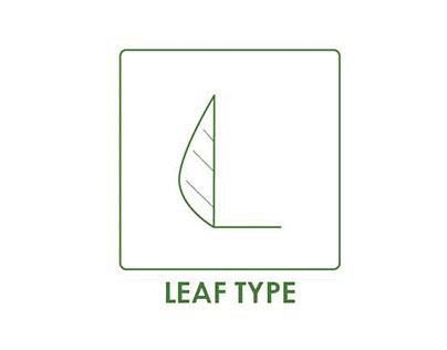 Leaf Type