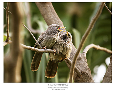 A Matter to discuss : Bird Photography Project