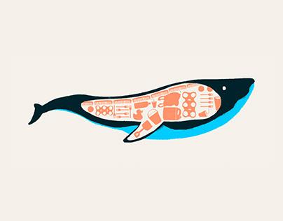 ¡Menos plástico, más mar! — Infografía
