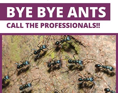 Ant Control Brisbane