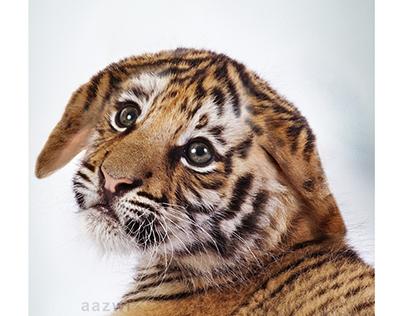 Baby Tiger - digital imaging