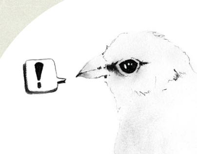 Bird Alert !