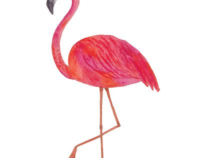 Watercolor pink flamingo