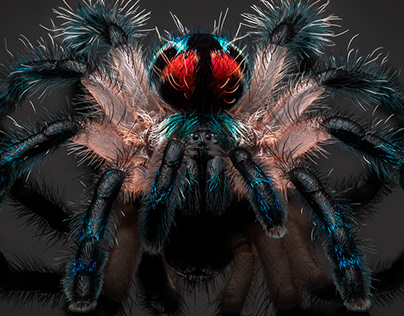 Focus stacked spiders