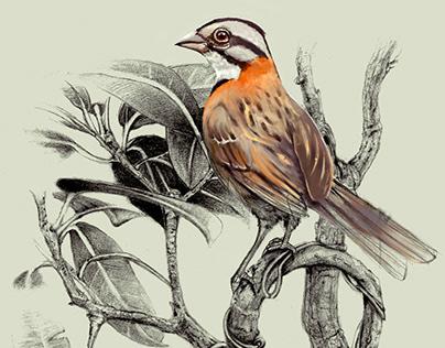 Imagen Taller de Ilustración Científica y Natural