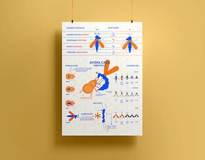 Infografía - Avispa Caza Tarántula