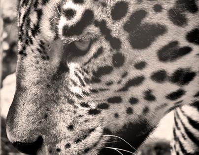 Catálogo de fotografía Africam Safari Puebla