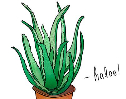 Haloe!