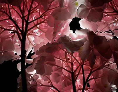 """ARTWORK PRINTS. """"FLOWERS"""" Series"""