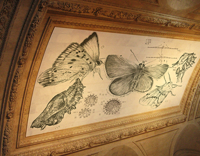 Moth Possible for New York Public Library