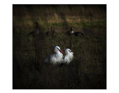 Storkslife
